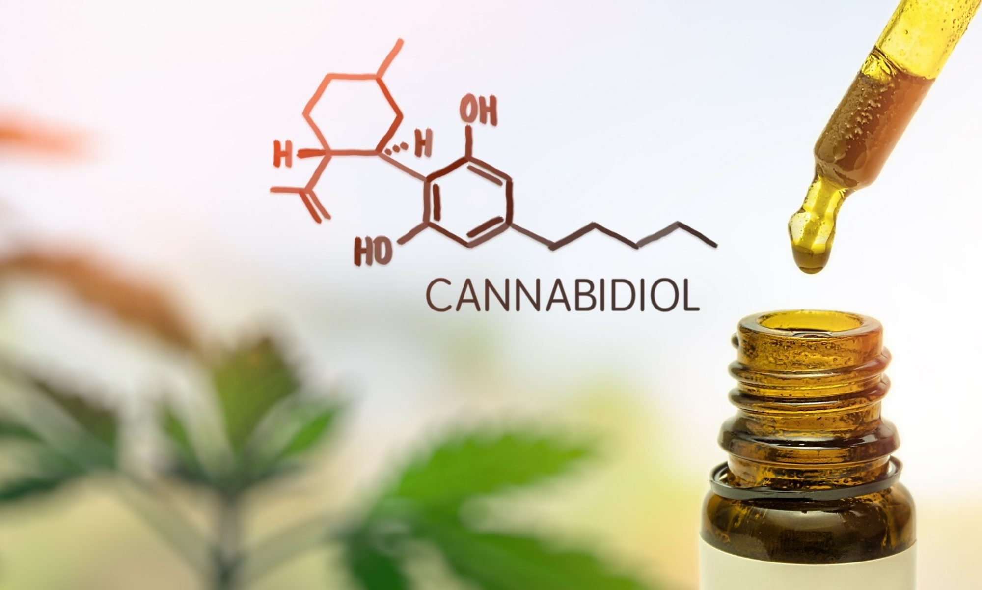 Best Online CBD Reviews